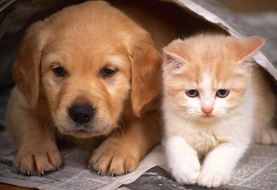 猫狗的超能力——你听说过会说话的猫吗?
