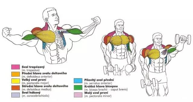 健身圈最火的56张肌肉训练图解,告诉你每个部位怎么练!