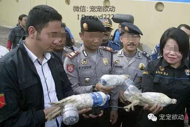 走私动物的黑心商人,竟将快灭绝的鹦鹉塞进塑料水瓶中