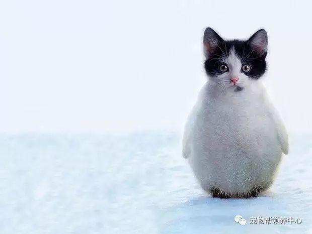 如果动物们都换成猫脸都会变成啥样?