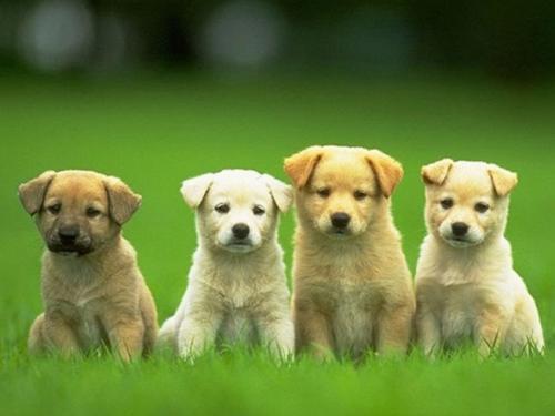 今天为你们讲解,做梦梦到狗是什么意思?