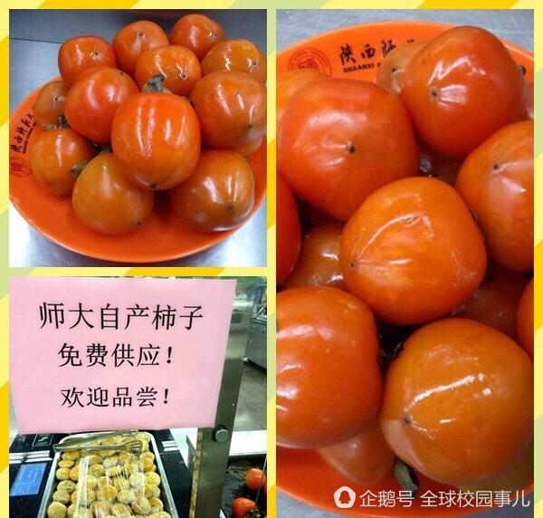 陕西西安:桃子、枇杷后,高校又请学生免费吃柿子