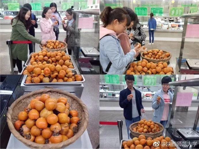 """""""陕西吃饭大学""""校园自产柿子同学们免费吃 你们学校呢?"""
