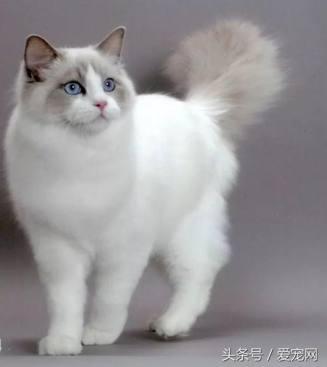 上班族养什么宠物可行性比较高?简述八种适合上班族的宠物