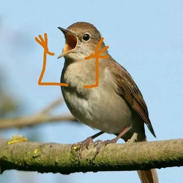网友恶搞给小鸟加上了小手,瞬间一堆表情包