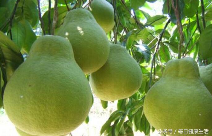 柚子去火还是上火,柚子有什么功效与作用是什么?