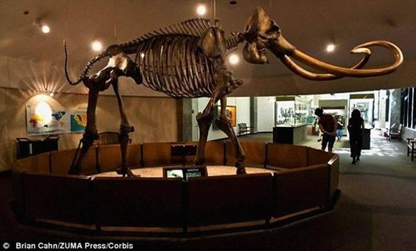 最新DNA证据表明多毛猛犸和哥伦比亚猛犸起源于相同的原始物种