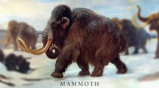 猛犸象的简介、种类资料及图片01