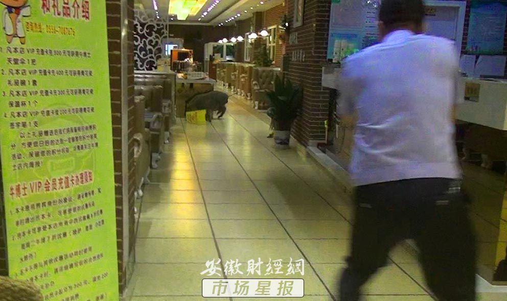 宿松:野猪夜闯餐饮店 特警保民平安将其击毙