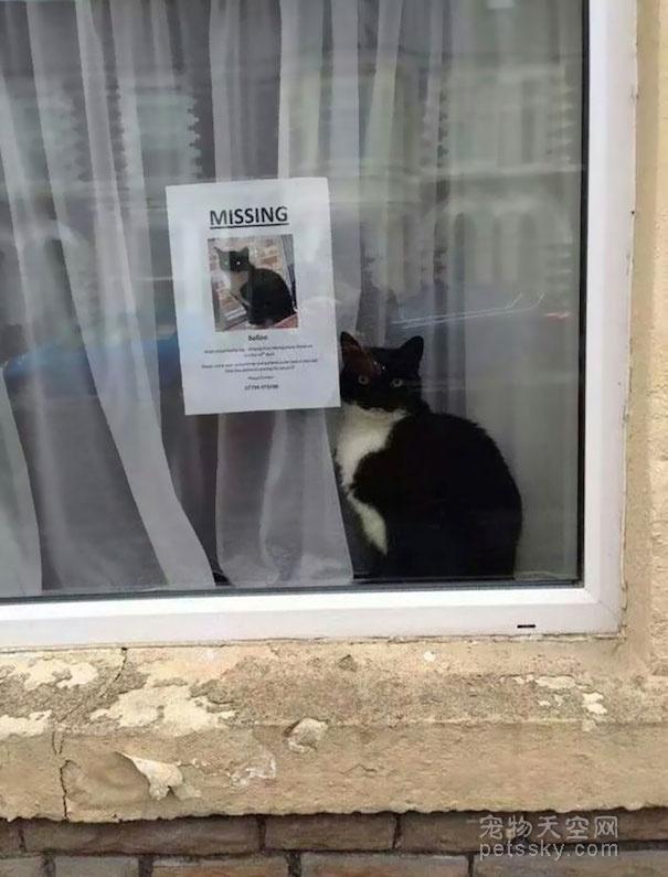 """超级巧合的照片:走丢的猫咪找到找它主人的""""寻猫启事"""""""