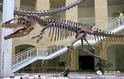 南方巨兽龙:南美洲巨型食肉恐龙