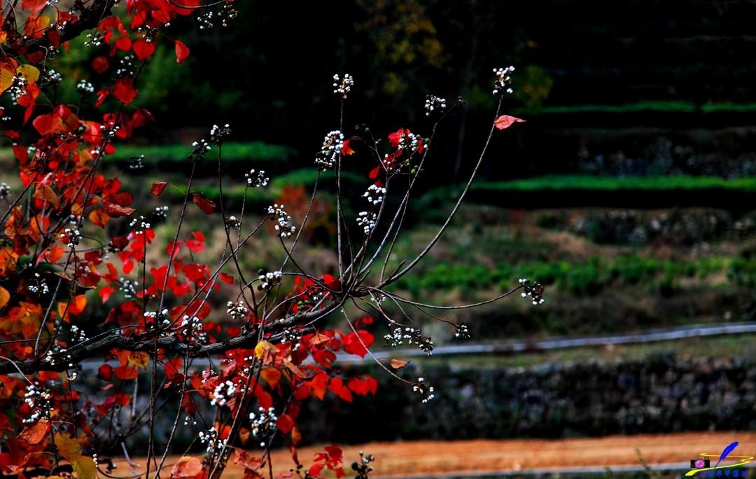 英山,寻找深秋的那抹油彩