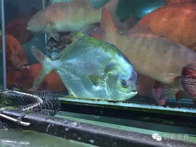 香港西贡海鲜市场,珍稀野生鱼类宝典! 食材宝典 第32张
