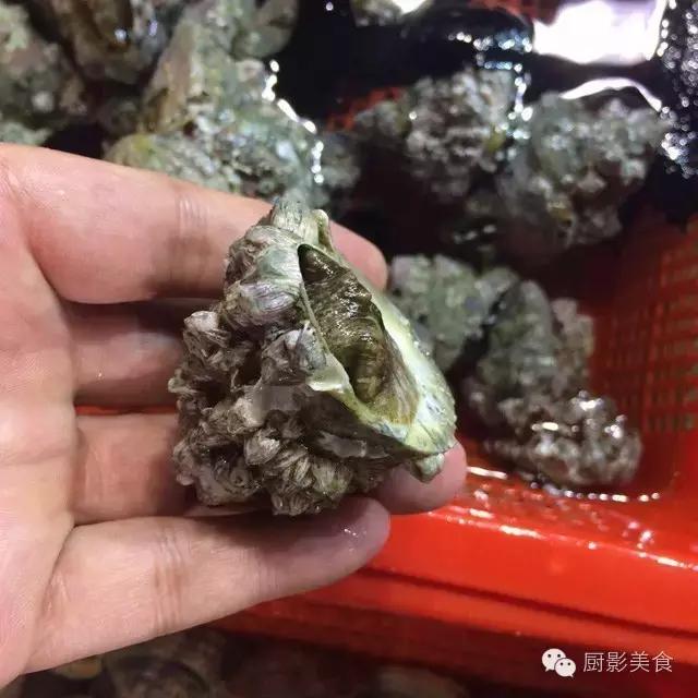 香港西贡海鲜市场,珍稀野生鱼类宝典! 食材宝典 第49张