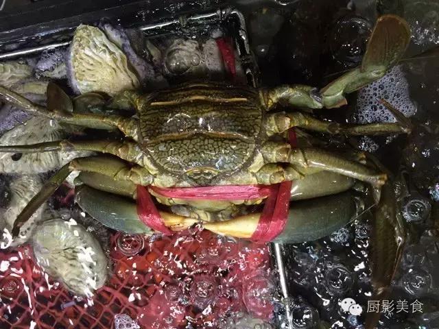 香港西贡海鲜市场,珍稀野生鱼类宝典! 食材宝典 第71张