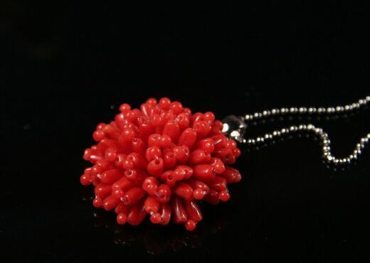 红珊瑚丨这些你不得不知道的知识
