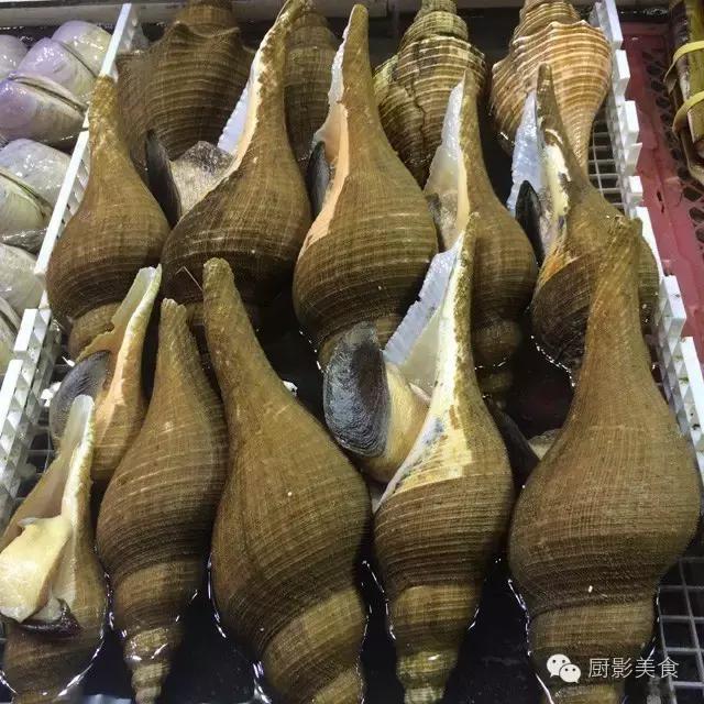 香港西贡海鲜市场,珍稀野生鱼类宝典! 食材宝典 第34张