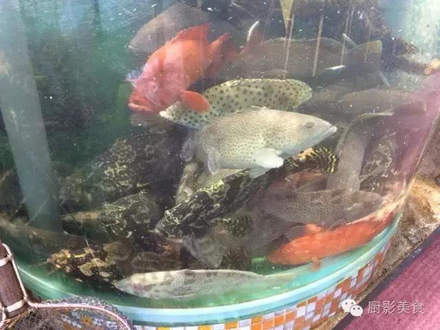 香港西贡海鲜市场,珍稀野生鱼类宝典! 食材宝典 第7张