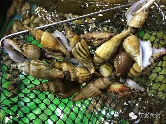 香港西贡海鲜市场,珍稀野生鱼类宝典! 食材宝典 第50张