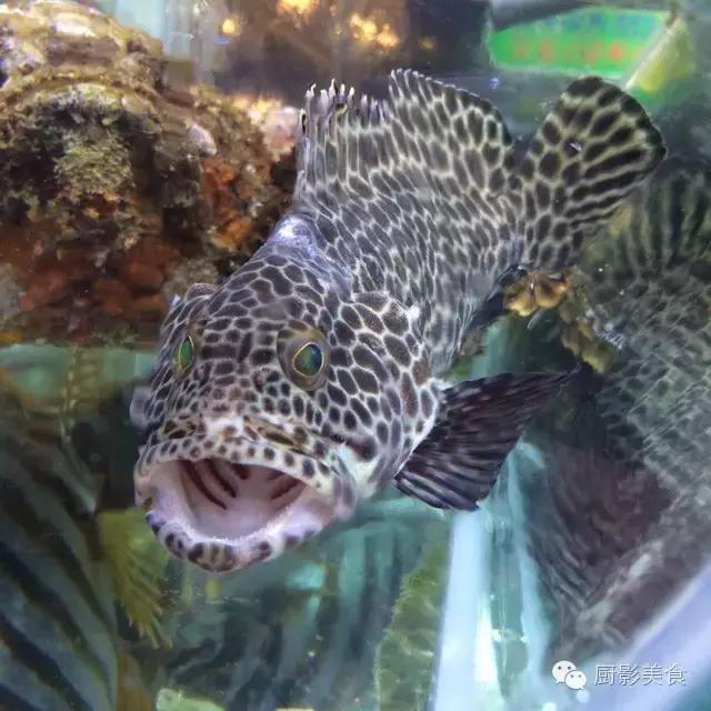 香港西贡海鲜市场,珍稀野生鱼类宝典! 食材宝典 第24张