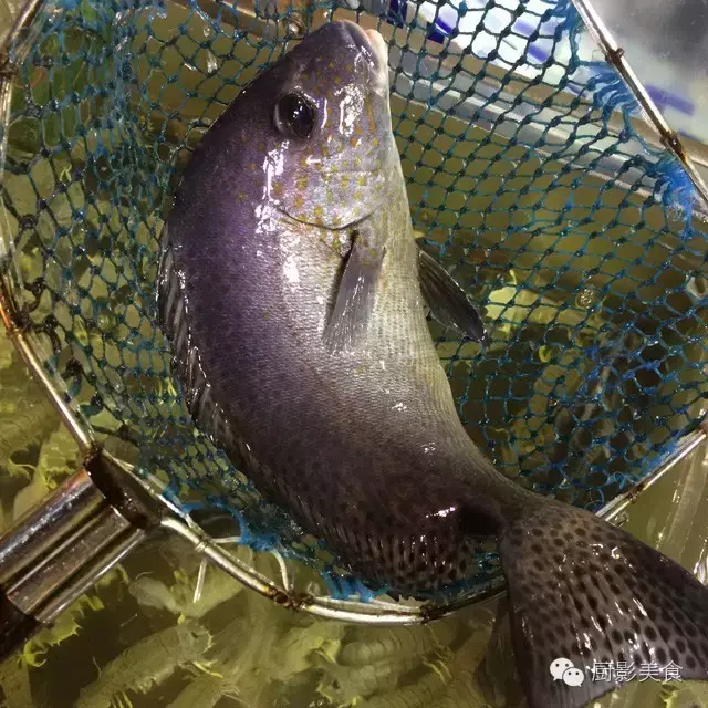 香港西贡海鲜市场,珍稀野生鱼类宝典! 食材宝典 第31张