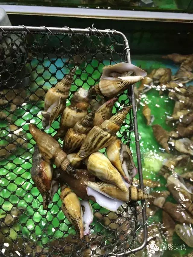 香港西贡海鲜市场,珍稀野生鱼类宝典! 食材宝典 第51张