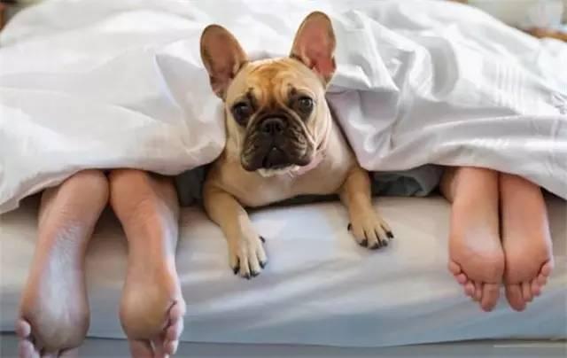 和狗狗同床共枕好还是不好,看完你就知道了!