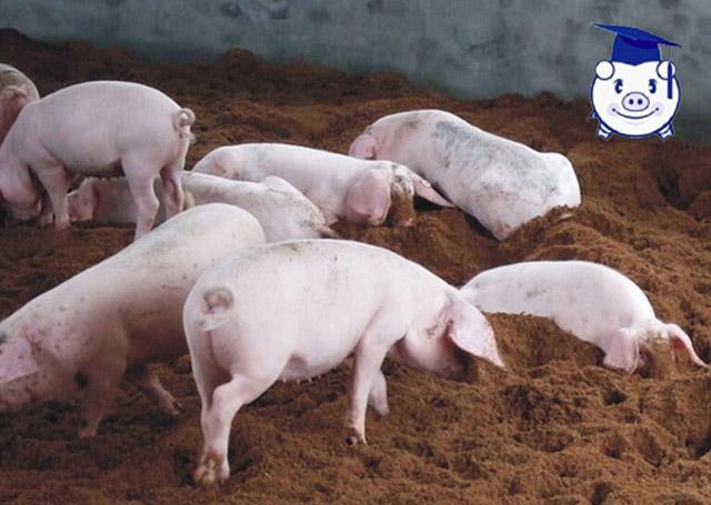 这可能是有史以来最科学的养殖方式,论生态养殖的五大优势!