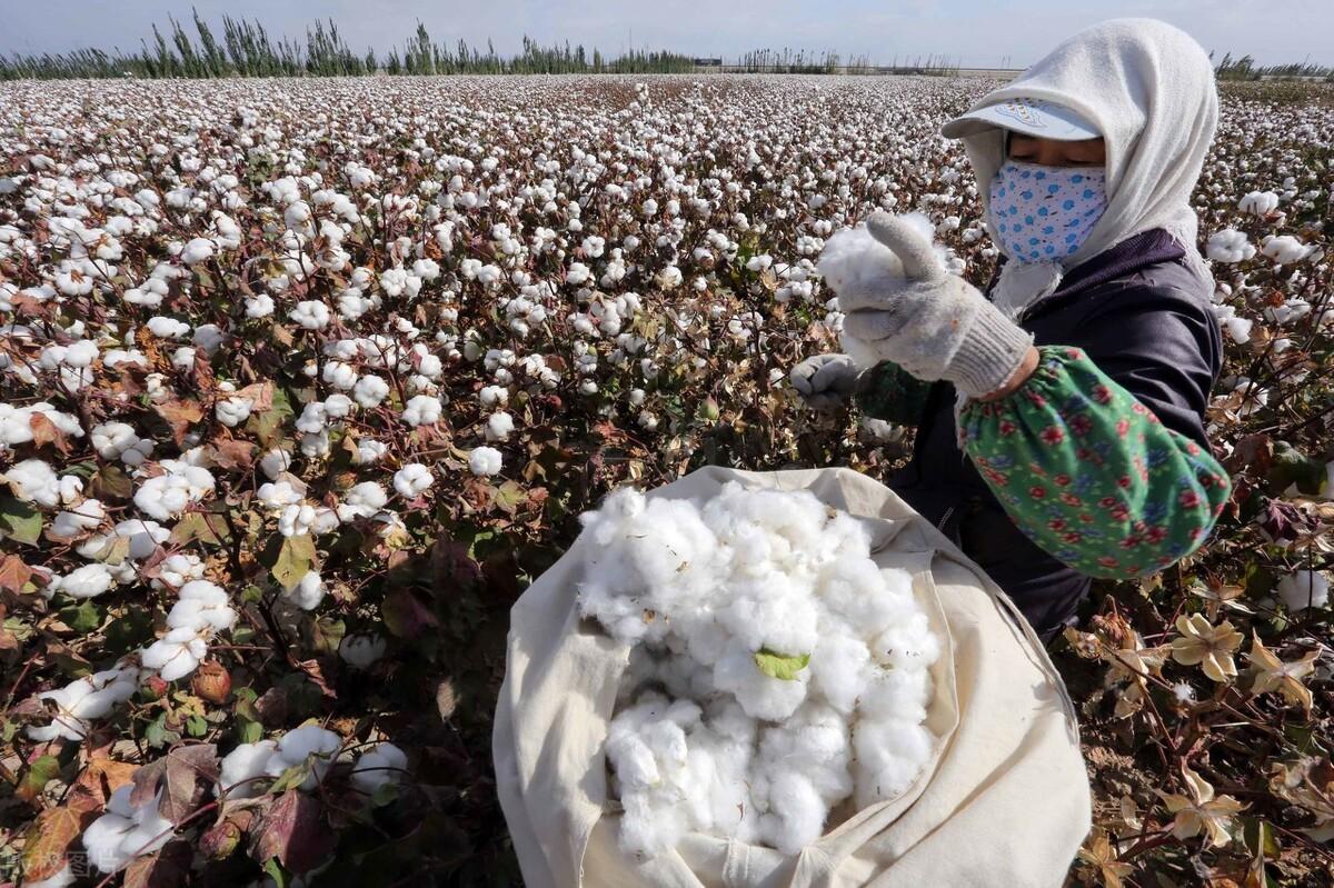 曝中国禁止进口澳洲棉花,或征40%关税!澳洲急了:不应搞歧视