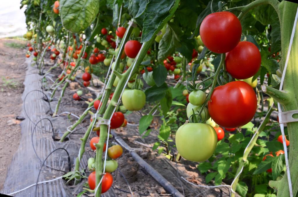 什么是现代化温室农业?温室农业为什么要发展水肥一体化灌溉农业