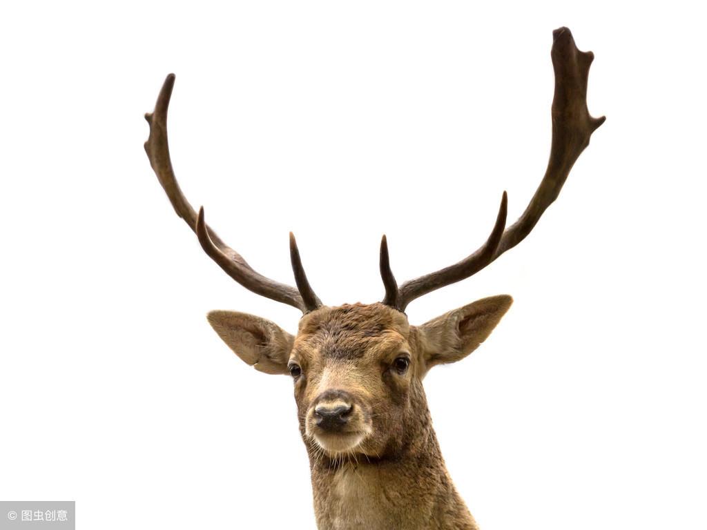 鹿茸片有哪些好处和功效呢?