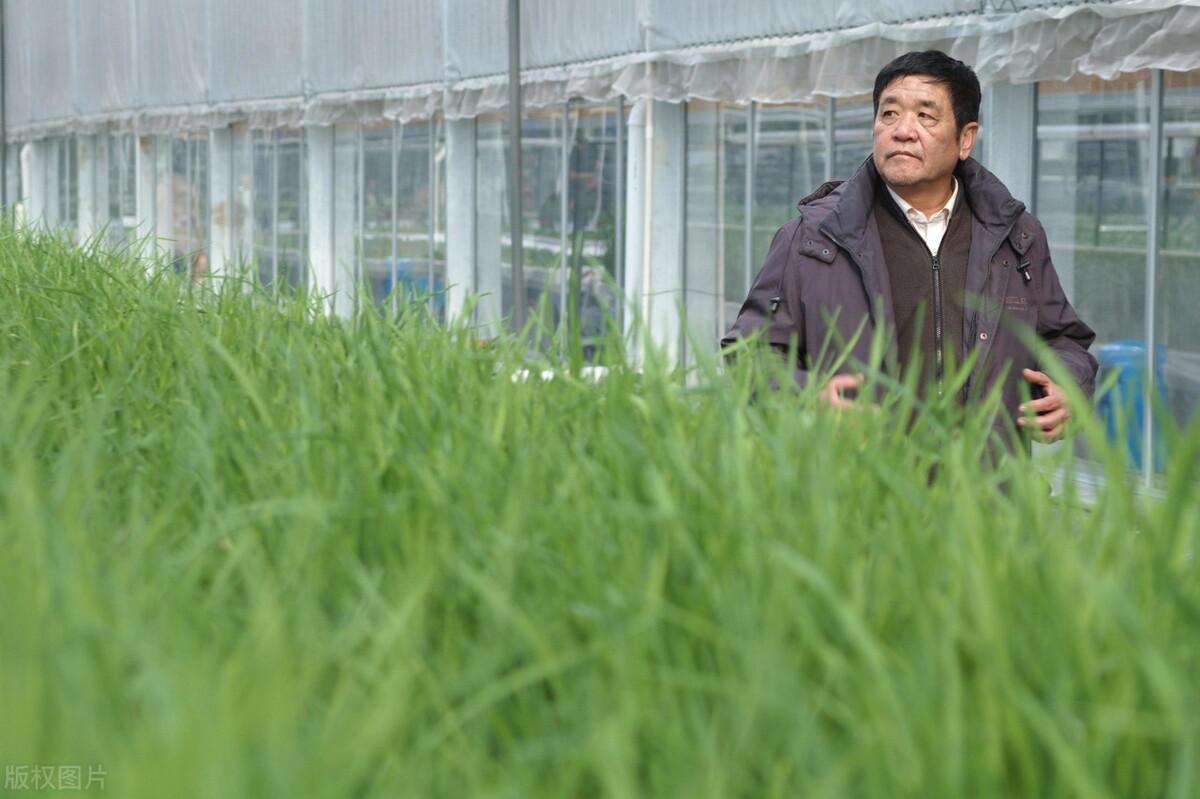 种植温室大棚为什么喜欢无土栽培种植?一文看懂国内外无土栽培