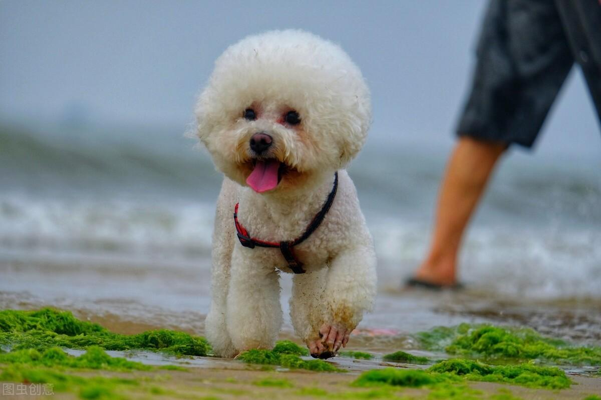这6种小型犬,人生要养上一只才算完整,你家的在其中吗?