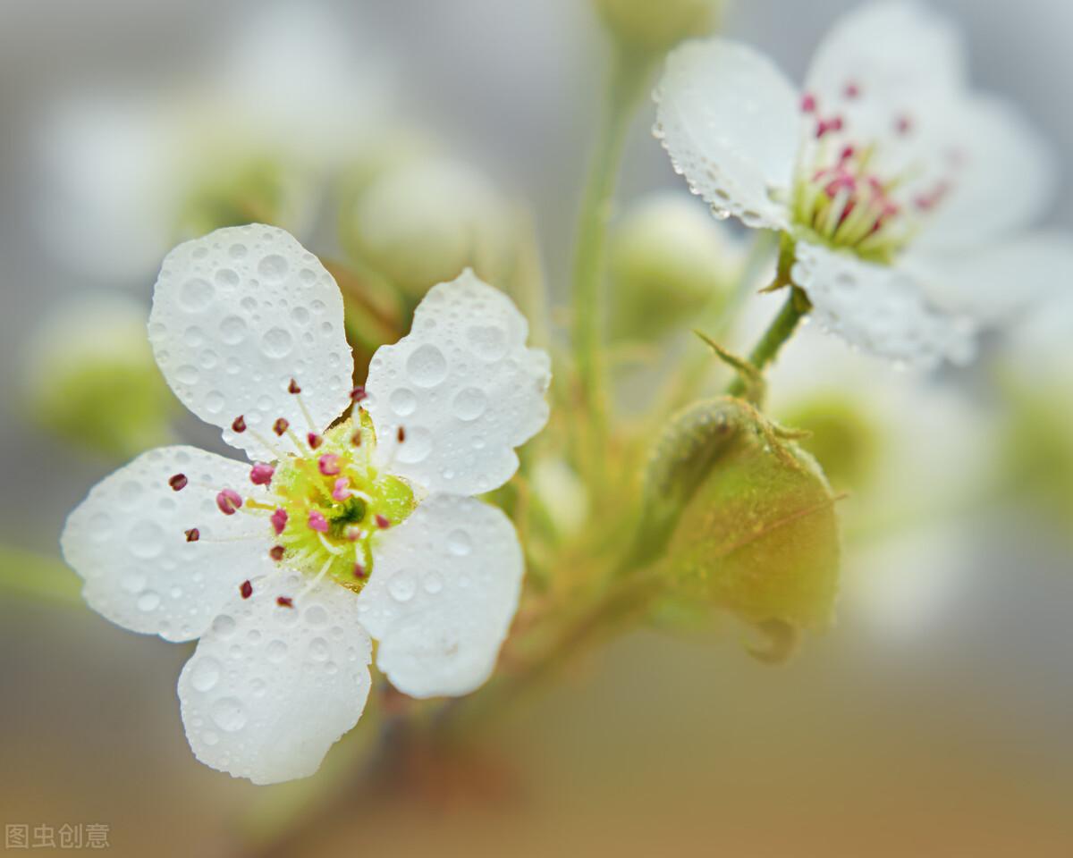 花季来临,爱拍照的你千万别错过(2021北京最佳赏花时间表)