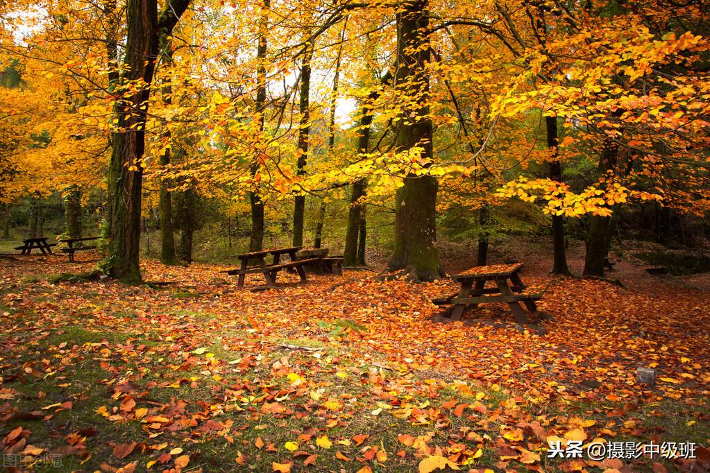 绝美秋色10张照片,没有拍摄瑕疵,学摄影要举一反三