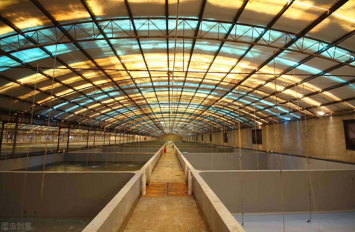 工厂化养殖对虾你都遇到什么难题?这些方法用上可提高产量