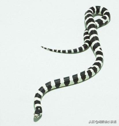 四种适合新手饲养的宠物蛇,你心动了吗?