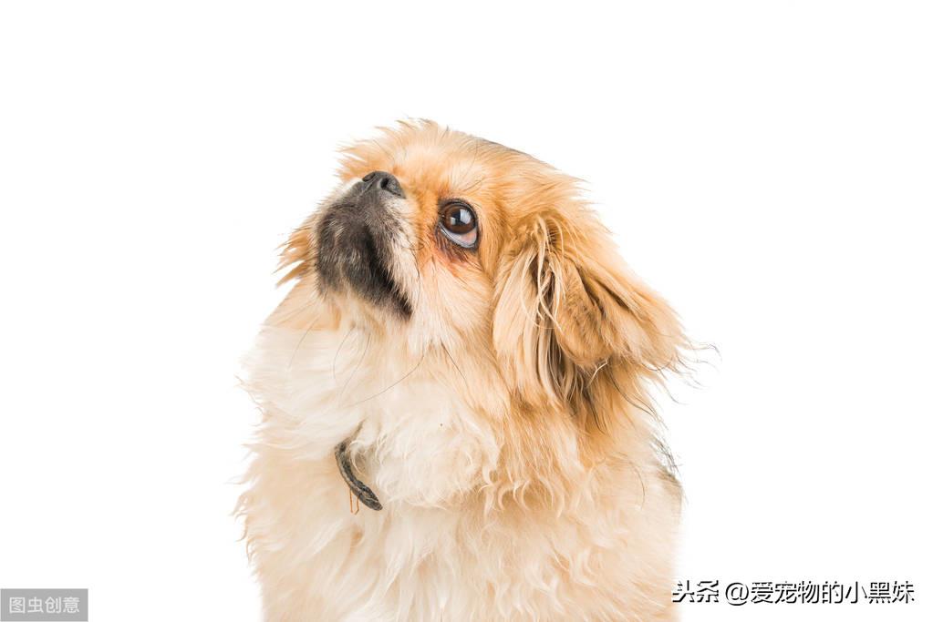 犬尿路結石是什麽?該如何診斷治療?一篇科普文告訴你答案