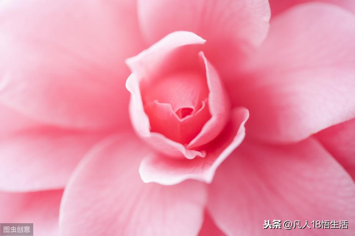 学会忘记,让身心轻松;懂得舍得,让生活变得更加和谐美丽