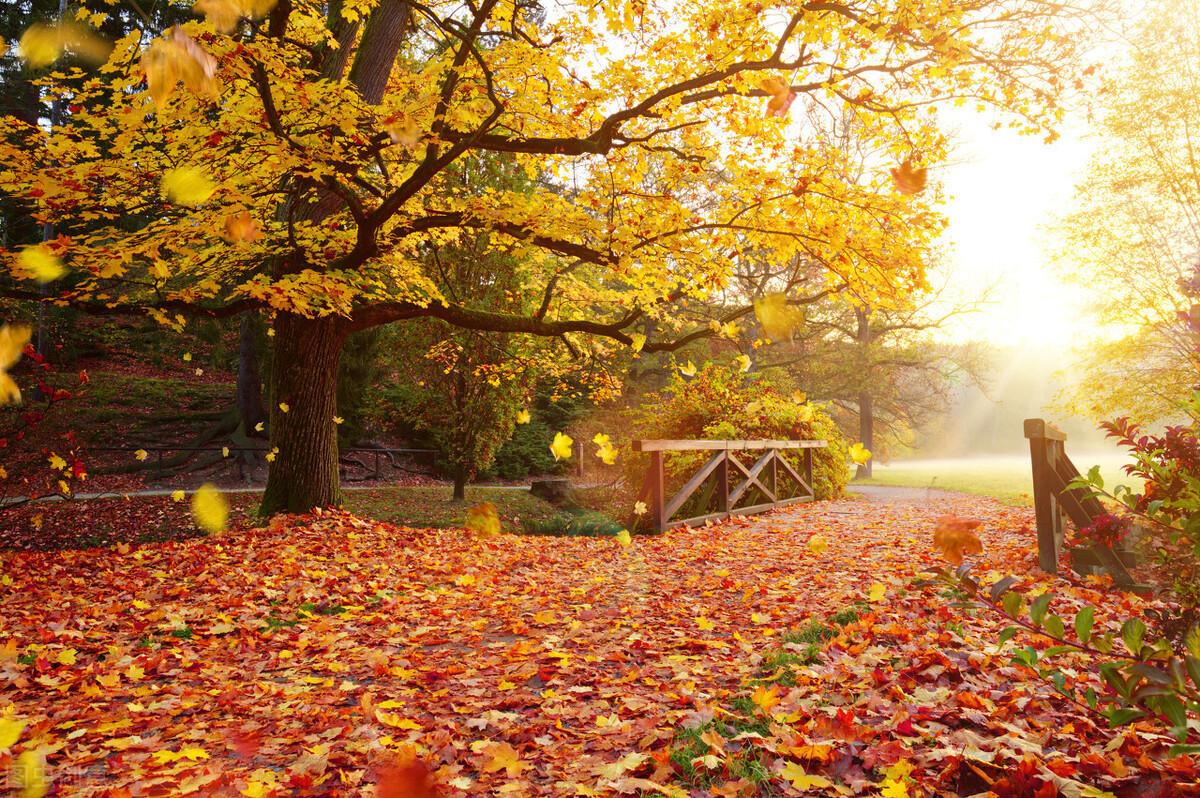 「散文」叶子的离开是风的追求还是树的不挽留
