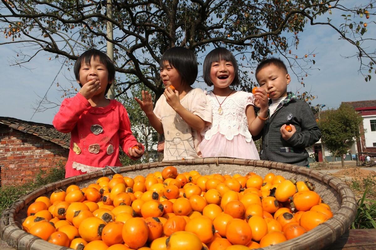 霜降节气,按照习俗要吃柿子,做成果酱也能吃,香甜营养寓意好