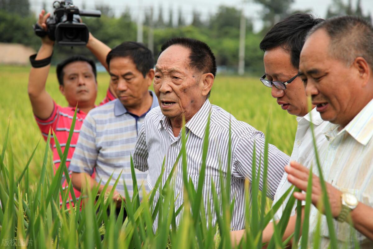 水稻亩产超2200斤,是怎么做到的?折射出农业生产的
