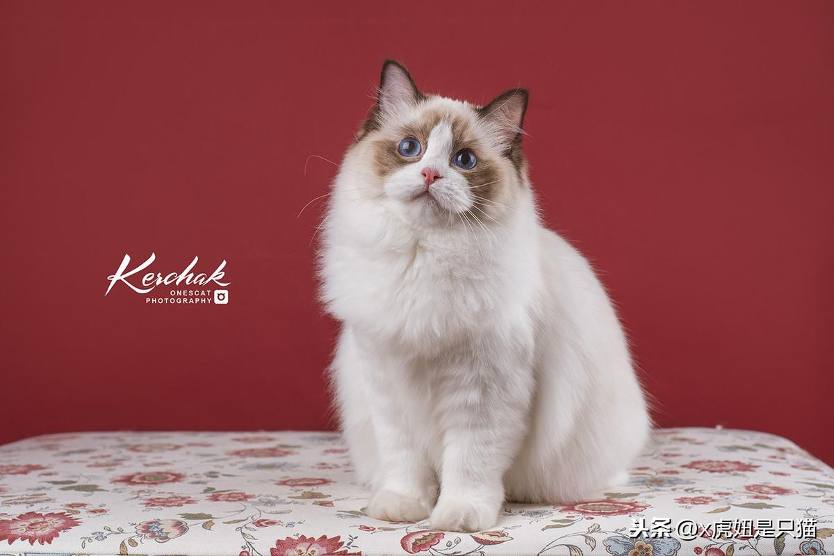 貓咪發情怎麽辦 貓咪發情的癥狀有哪些