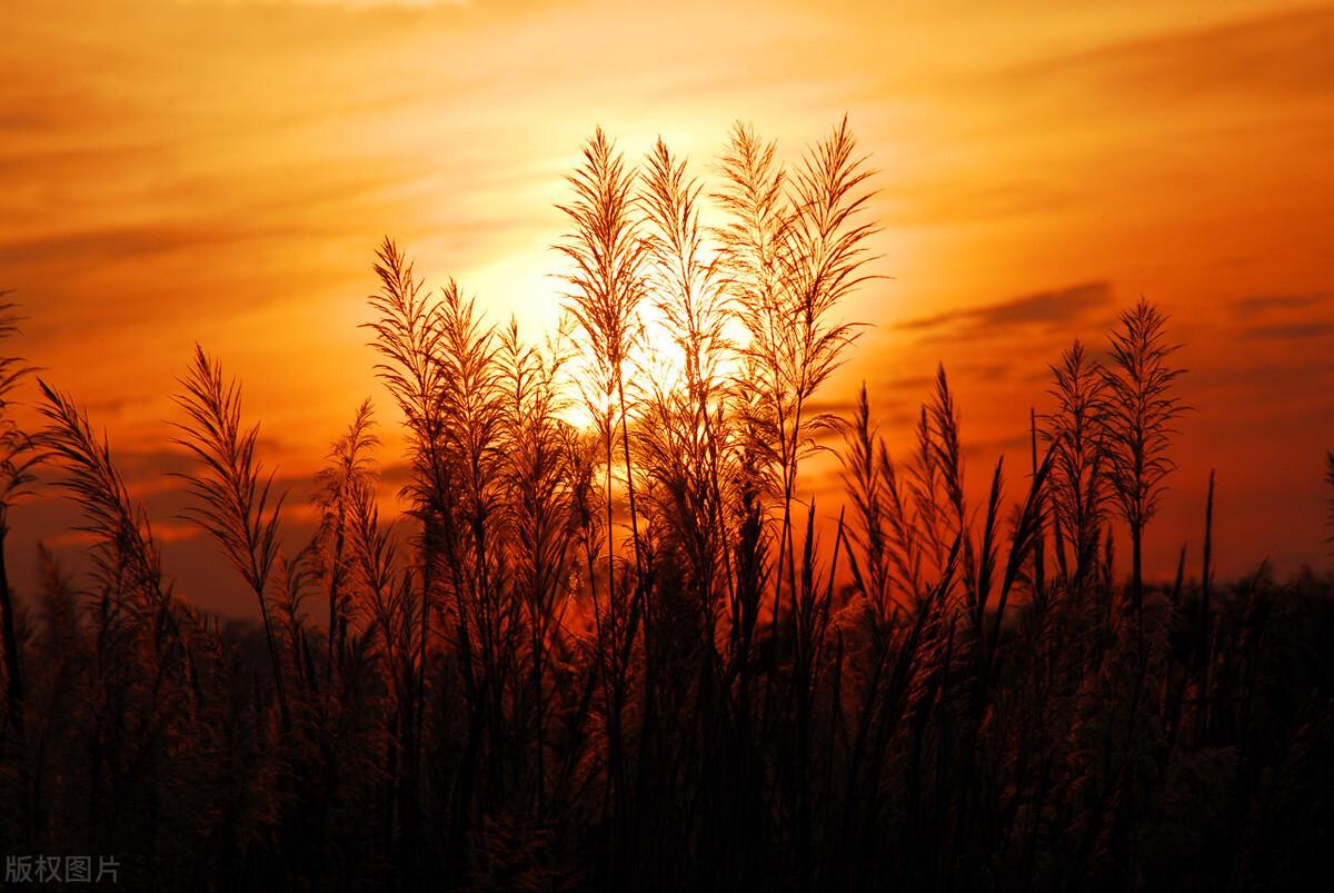散文 夕阳西下