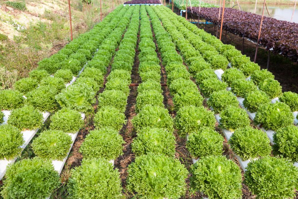 无土栽培之水培营养液的温度控制问题及解决方案