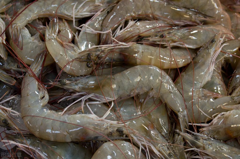 吃不完的鲜虾如何保存?水产店老板教我这样做,轻松保存一整年