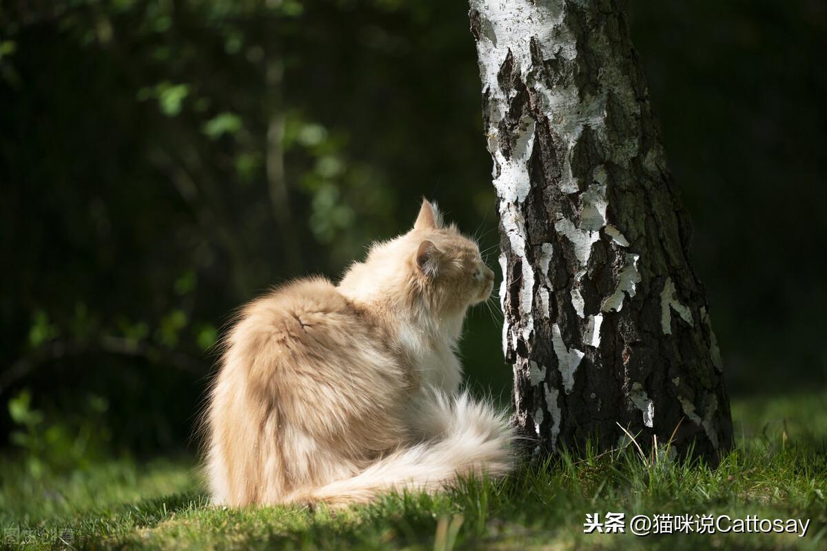 猫会精心布置猫领地,公猫之间的差异更大