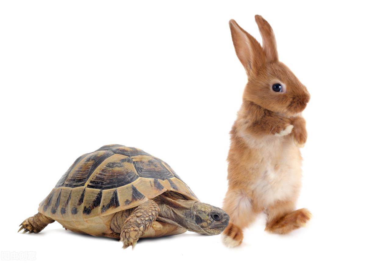 养龟要注意什么?