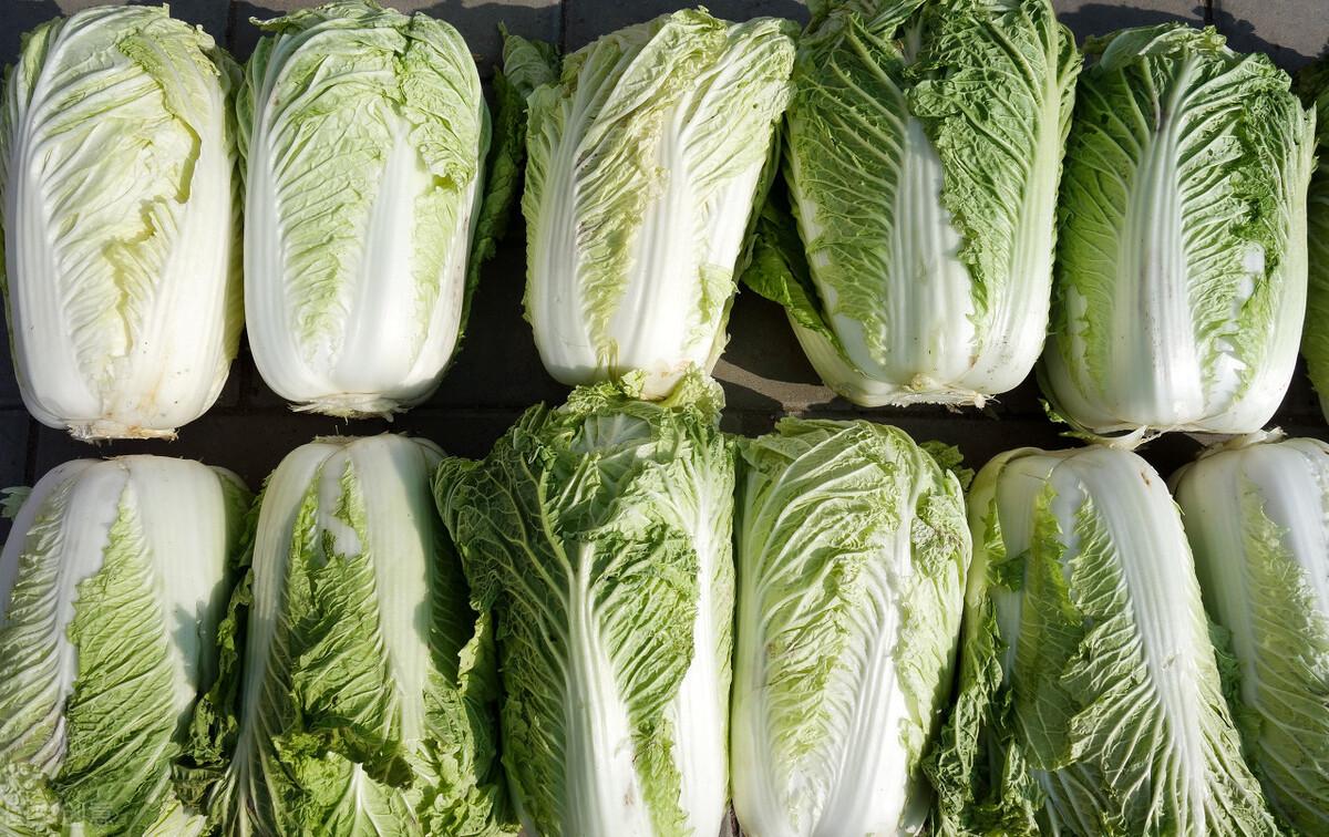大白菜別直接放地上保存,教你1招保鮮方法,買多了也不怕壞