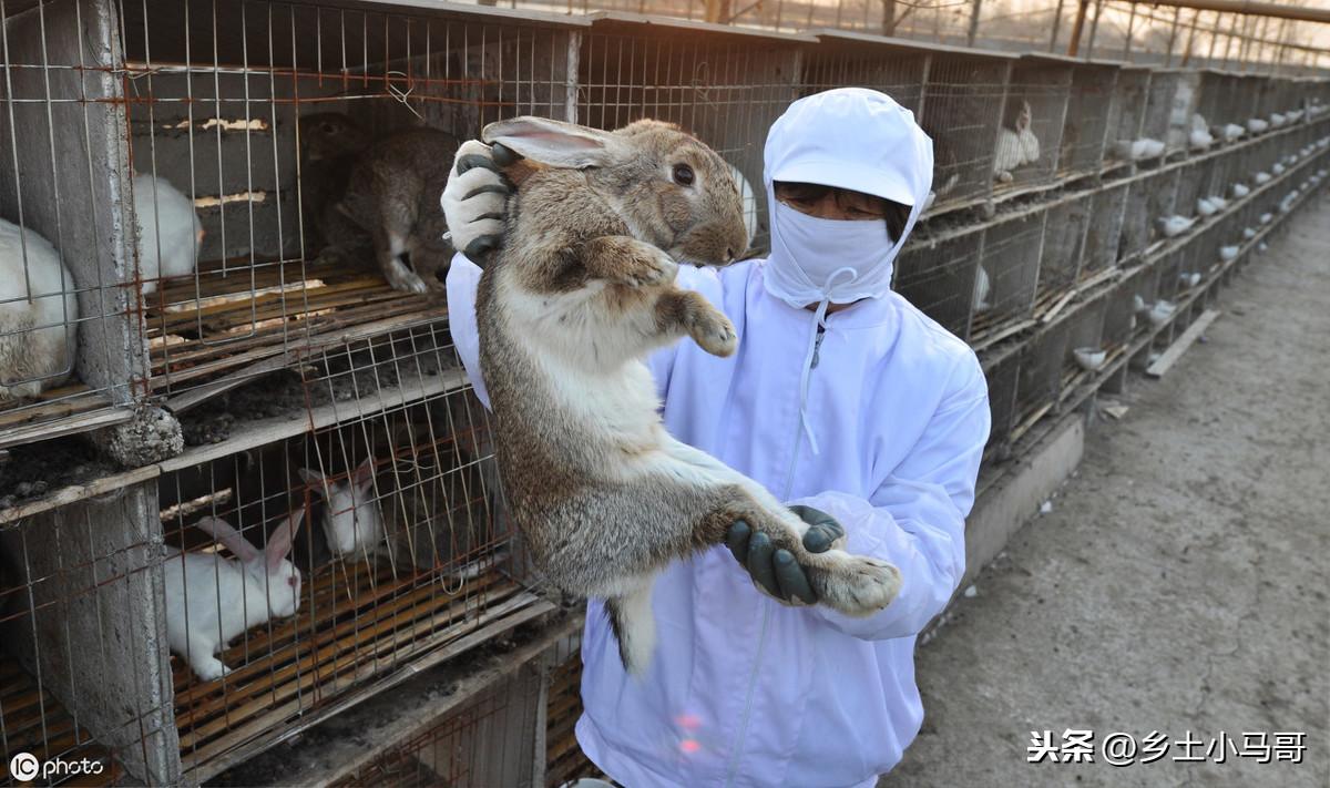 如何正確養兔子,兔子要喝水嗎?